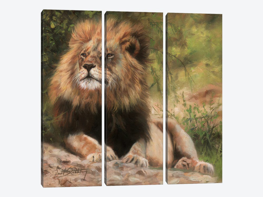 Lion Laying Down by David Stribbling 3-piece Canvas Print