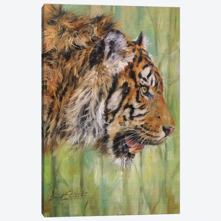Amur Tiger Profile Canvas Print #STG6} by David Stribbling Canvas Wall Art