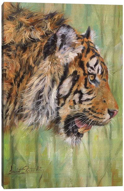 Amur Tiger Profile Canvas Art Print