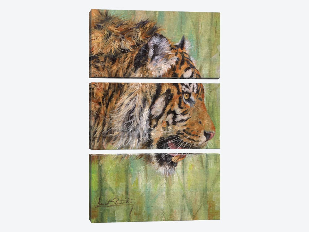 Amur Tiger Profile by David Stribbling 3-piece Canvas Artwork