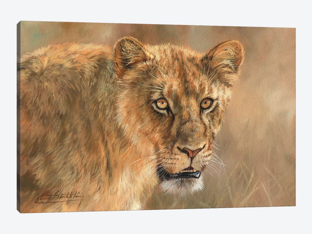 Lioness by David Stribbling 1-piece Canvas Wall Art