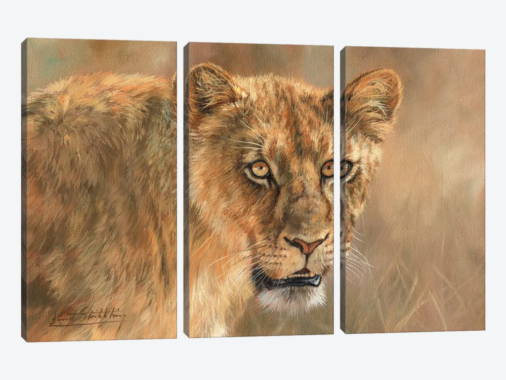 Lioness by David Stribbling 3-piece Canvas Wall Art
