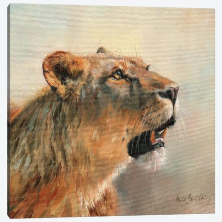 Lioness Portrait II Canvas Print #STG71} by David Stribbling Art Print