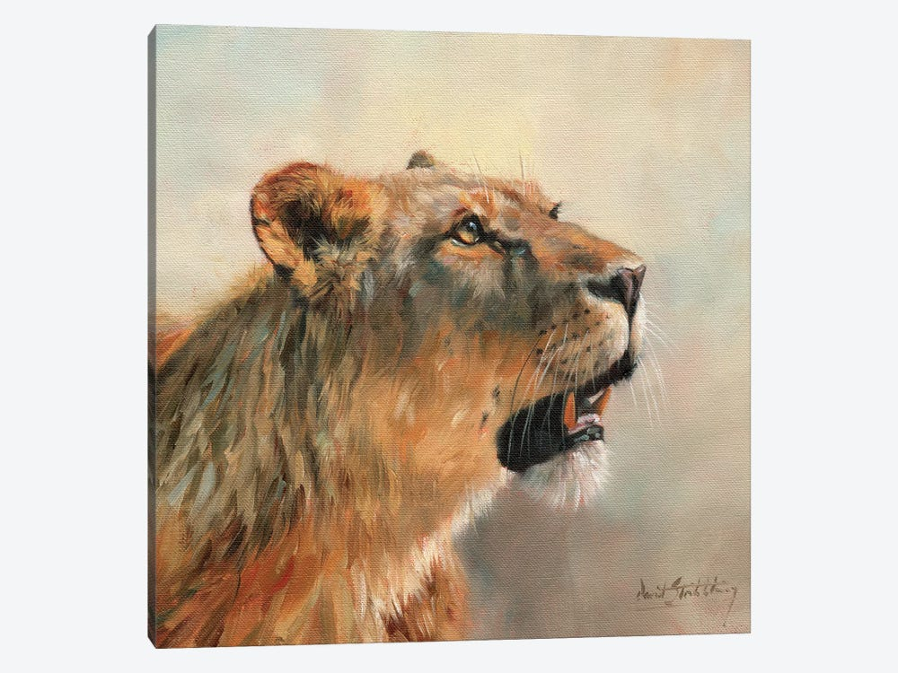 Lioness Portrait II by David Stribbling 1-piece Canvas Print