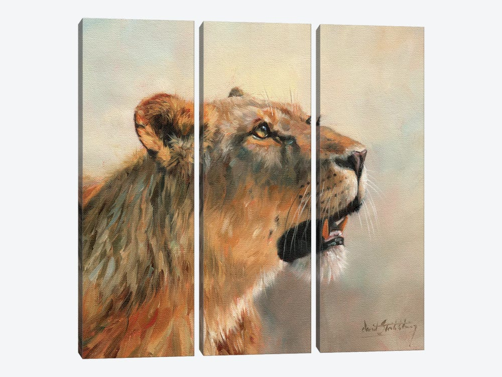 Lioness Portrait II by David Stribbling 3-piece Canvas Print