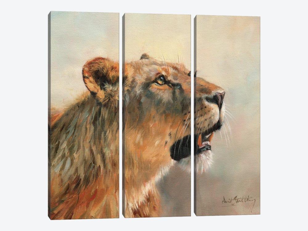 Lioness Portrait II by David Stribbling 3-piece Canvas Print