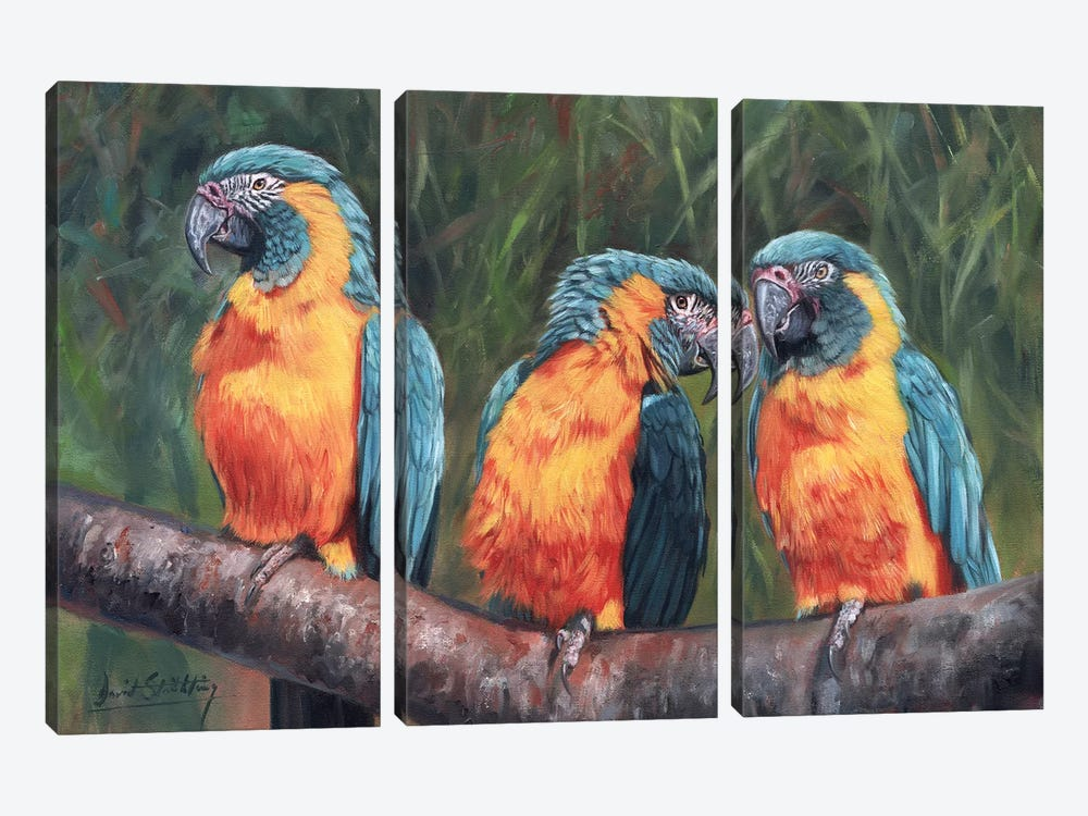 Macaws by David Stribbling 3-piece Canvas Art