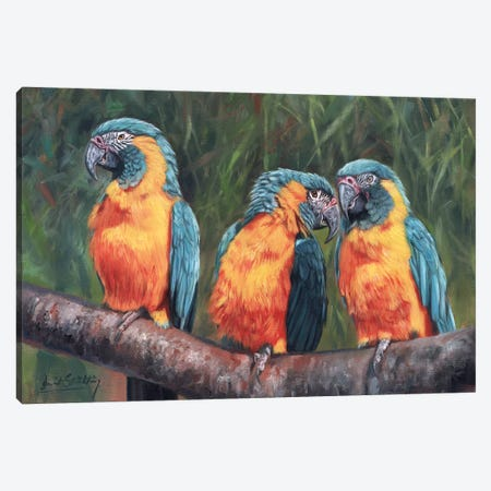 Macaws Canvas Print #STG72} by David Stribbling Art Print