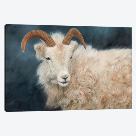 Mountain Goat I Canvas Print #STG73} by David Stribbling Canvas Art Print