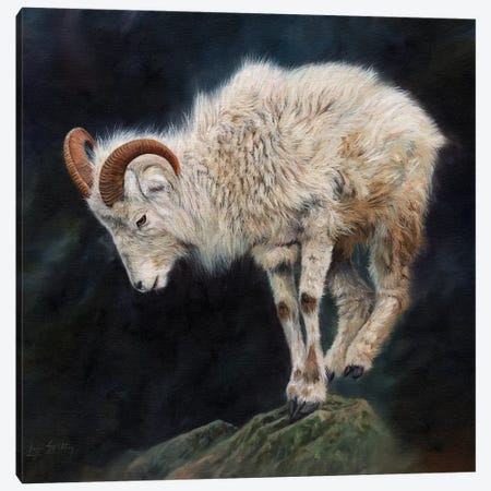 Mountain Goat II Canvas Print #STG74} by David Stribbling Canvas Wall Art