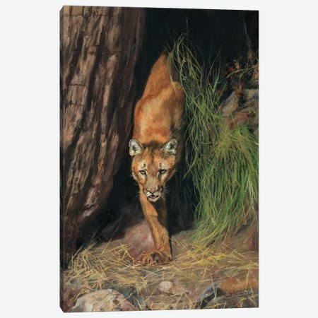 Mountain Lion I Canvas Print #STG75} by David Stribbling Canvas Wall Art
