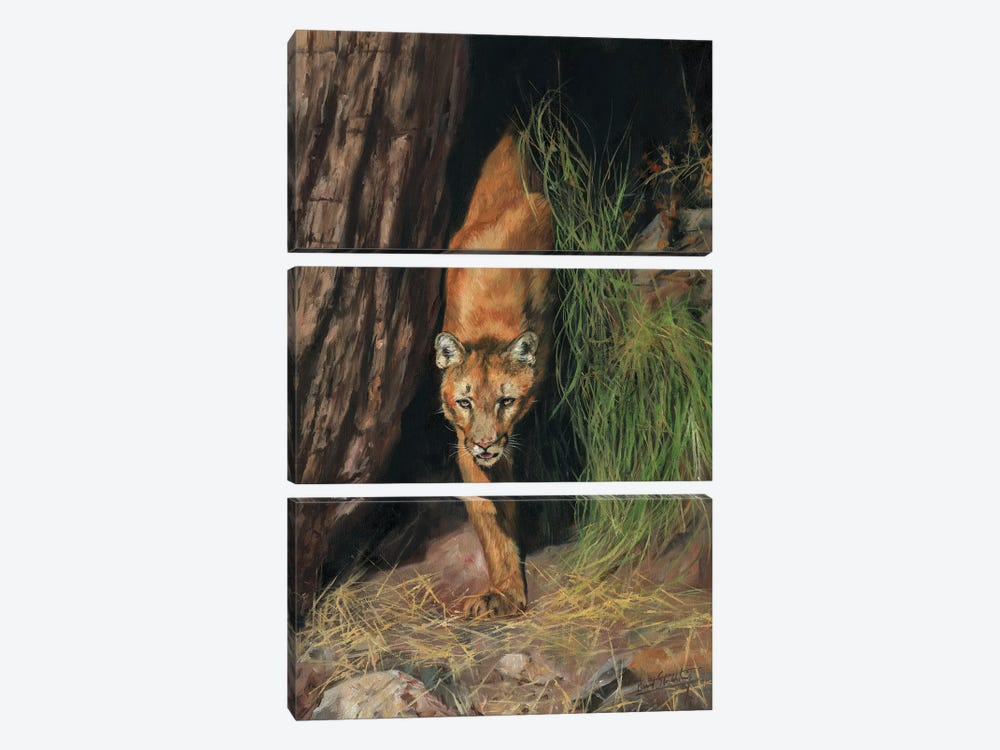 Mountain Lion I by David Stribbling 3-piece Canvas Print