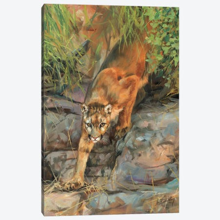Mountain Lion II Canvas Print #STG76} by David Stribbling Canvas Artwork