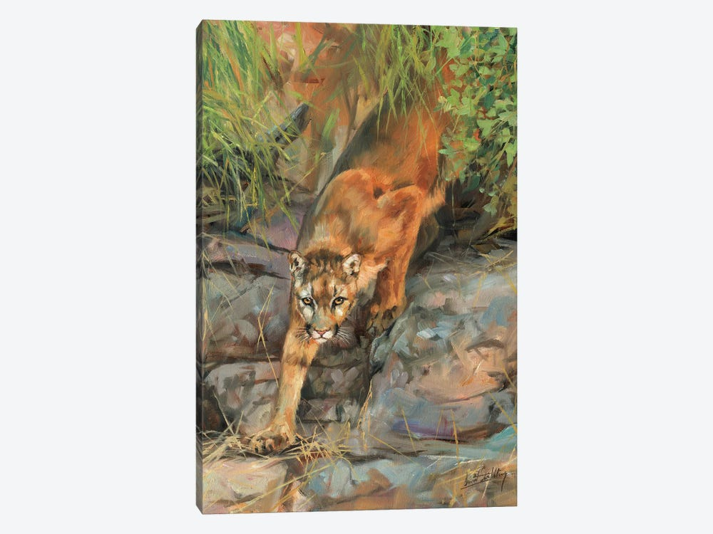 Mountain Lion II by David Stribbling 1-piece Canvas Wall Art