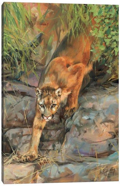 Mountain Lion II Canvas Art Print