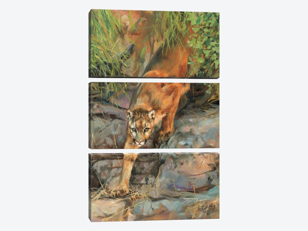 Mountain Lion II by David Stribbling 3-piece Canvas Art