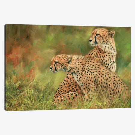 Pair Of Cheetahs Canvas Print #STG77} by David Stribbling Canvas Artwork