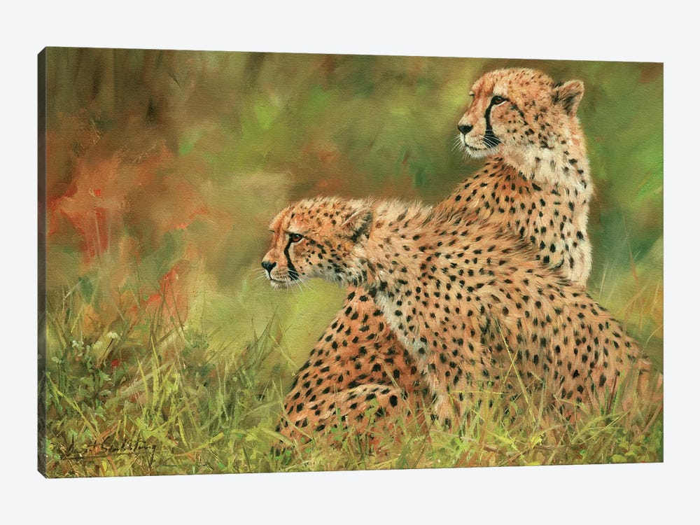Pair Of Cheetahs by David Stribbling 1-piece Canvas Print