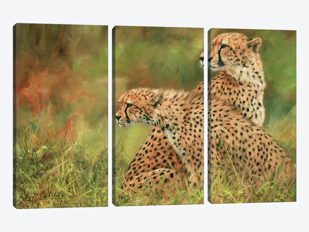 Pair Of Cheetahs by David Stribbling 3-piece Art Print