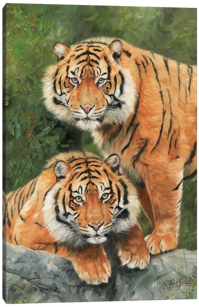 Pair Of Sumatran Tigers by David Stribbling Canvas Art Print