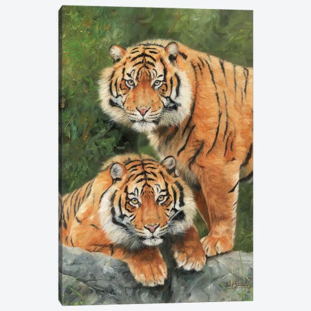 Pair Of Sumatran Tigers 3-Piece Canvas #STG78} by David Stribbling Art Print