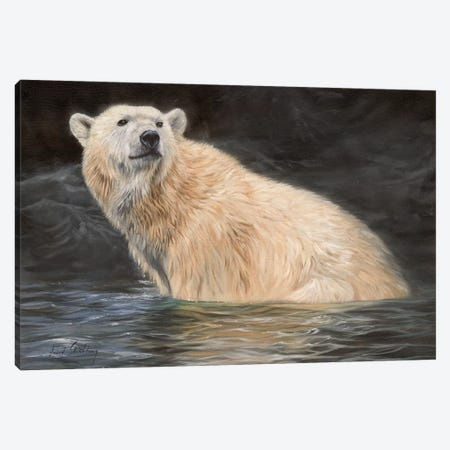 Polar Bear Canvas Print #STG79} by David Stribbling Art Print