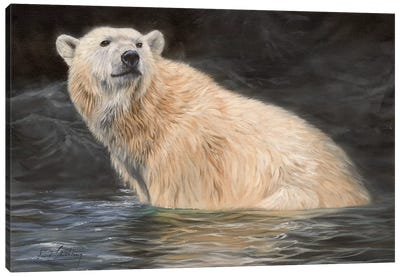 Polar Bear by David Stribbling Canvas Art Print