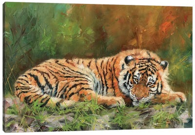 Amur Tiger Repose Canvas Art Print
