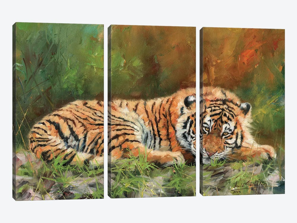 Amur Tiger Repose by David Stribbling 3-piece Canvas Art Print