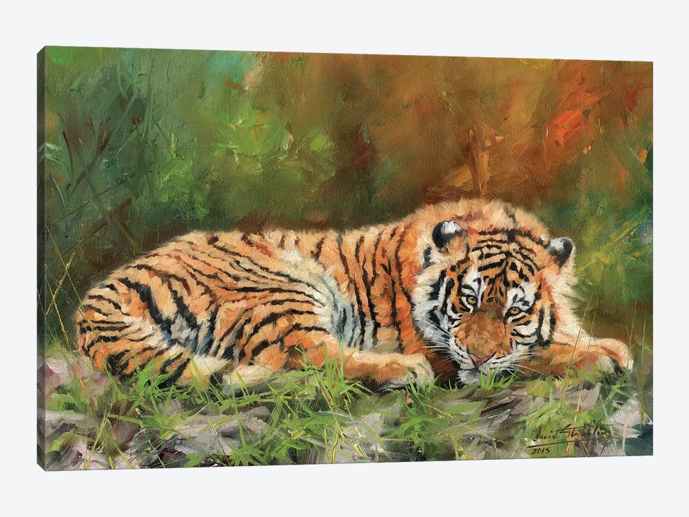 Amur Tiger Repose by David Stribbling 1-piece Art Print