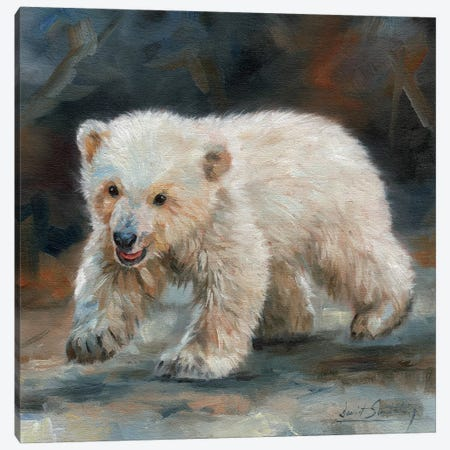 Polar Bear Baby Canvas Print #STG80} by David Stribbling Canvas Artwork