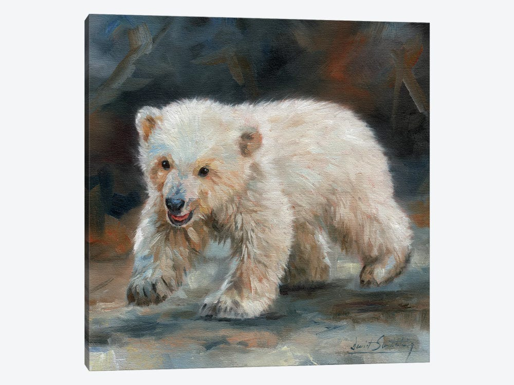 Polar Bear Baby by David Stribbling 1-piece Canvas Art Print