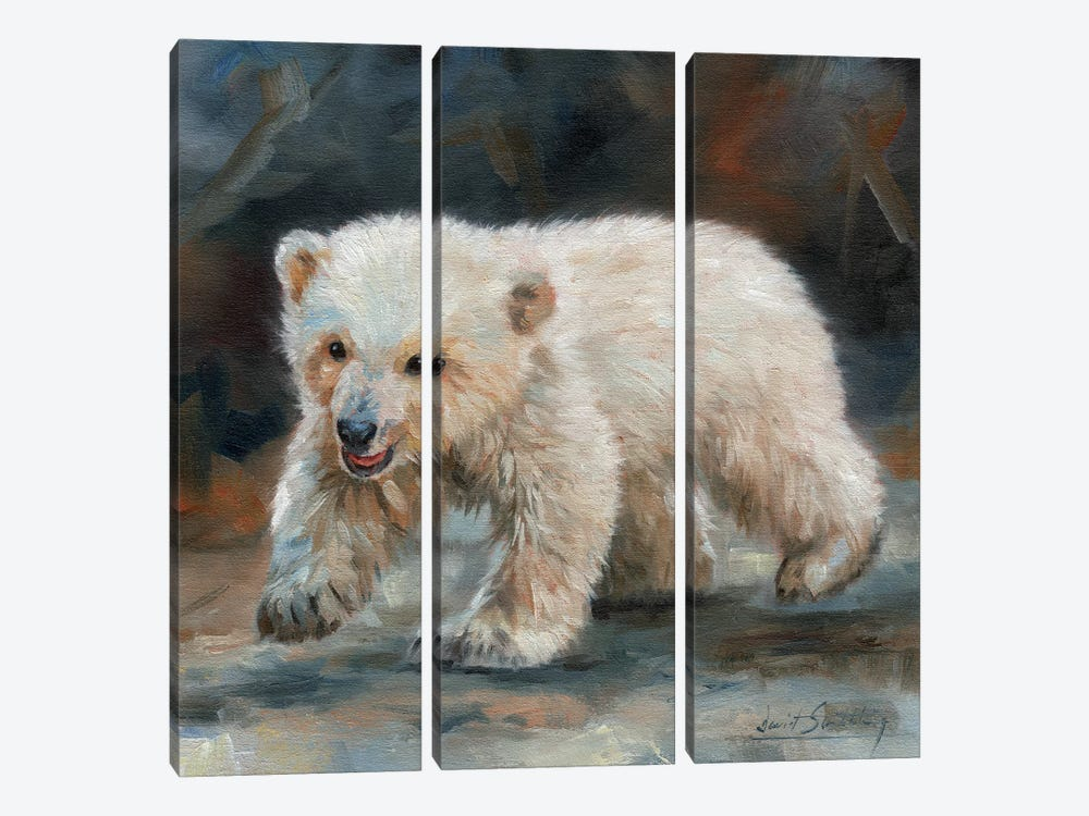 Polar Bear Baby by David Stribbling 3-piece Canvas Art Print