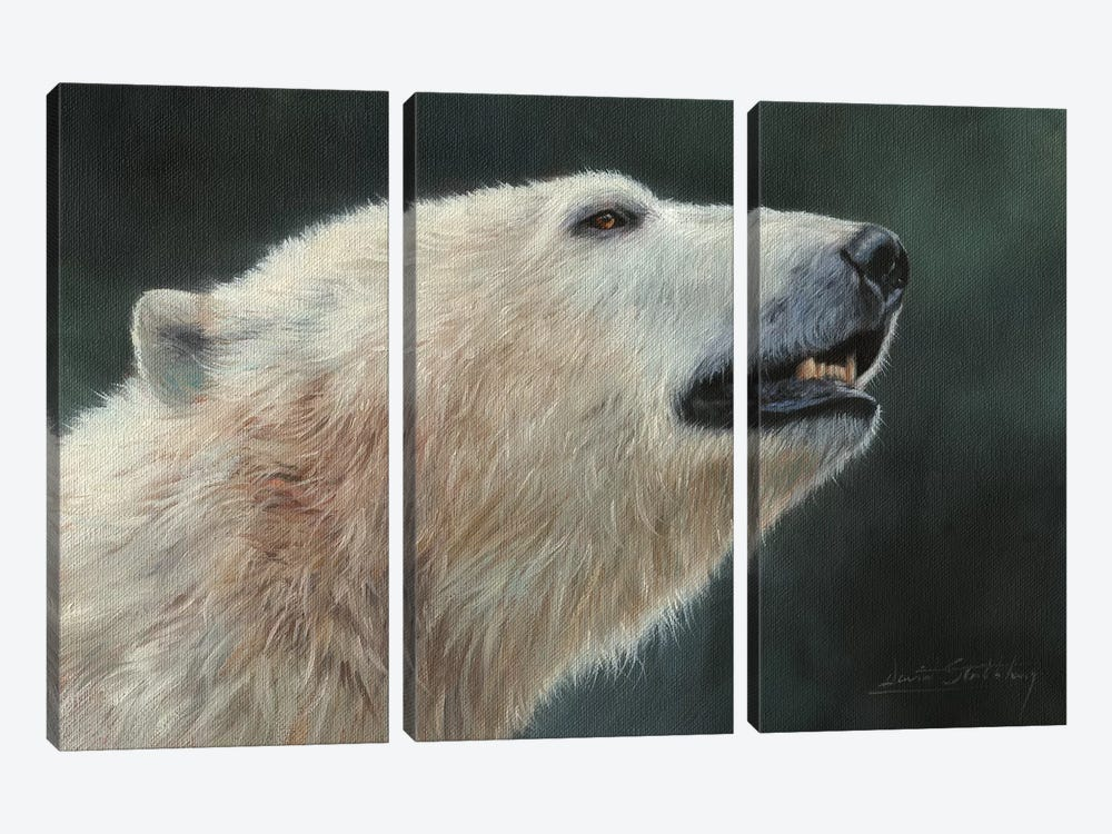 Polar Bear Portrait by David Stribbling 3-piece Canvas Wall Art