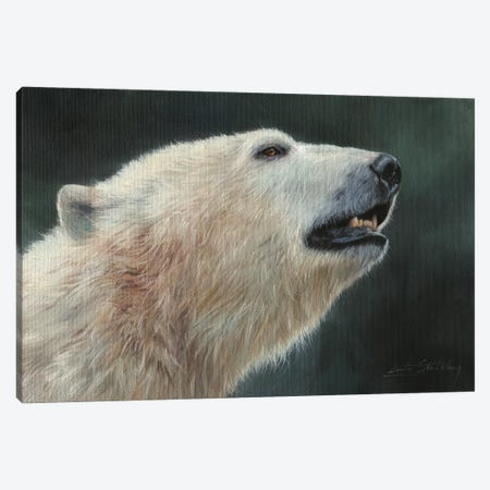 Polar Bear Portrait Canvas Print #STG81} by David Stribbling Canvas Wall Art