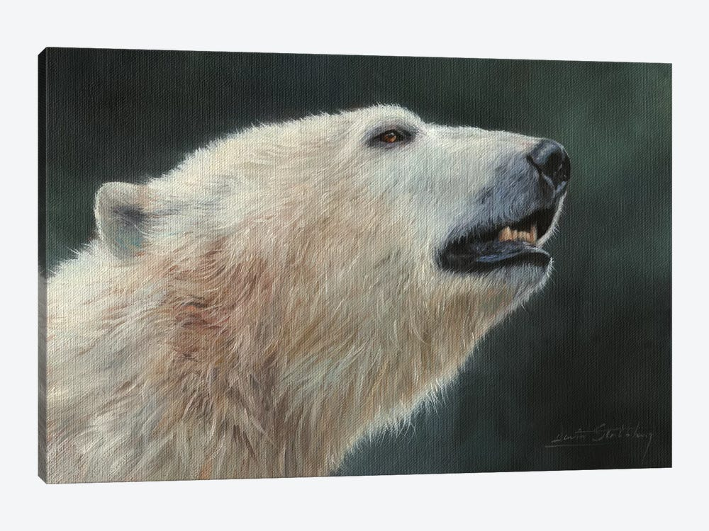 Polar Bear Portrait by David Stribbling 1-piece Canvas Artwork