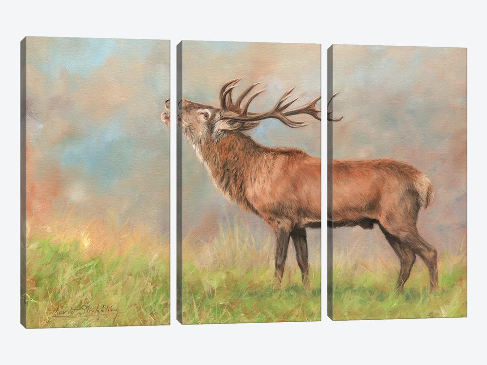Red Deer by David Stribbling 3-piece Canvas Print
