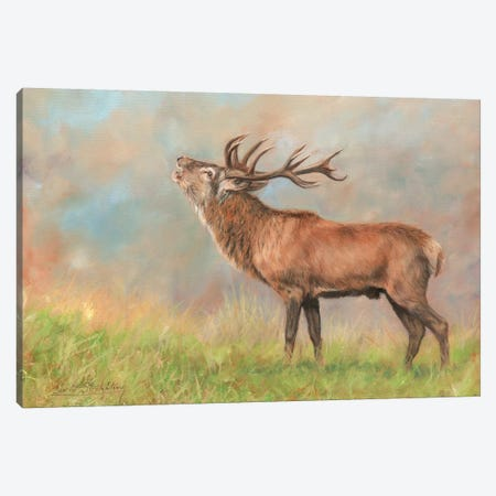 Red Deer 3-Piece Canvas #STG82} by David Stribbling Canvas Art