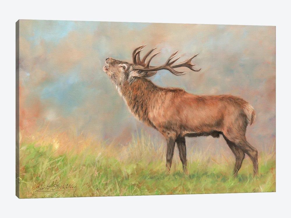 Red Deer by David Stribbling 1-piece Art Print
