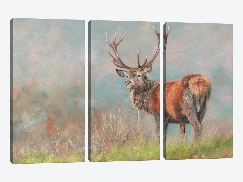 Red Deer II by David Stribbling 3-piece Art Print