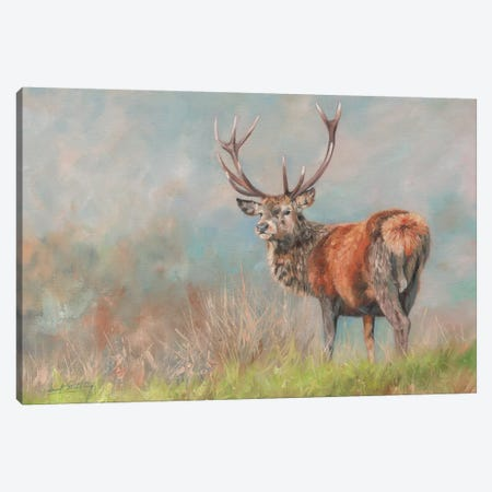 Red Deer II 3-Piece Canvas #STG84} by David Stribbling Canvas Print
