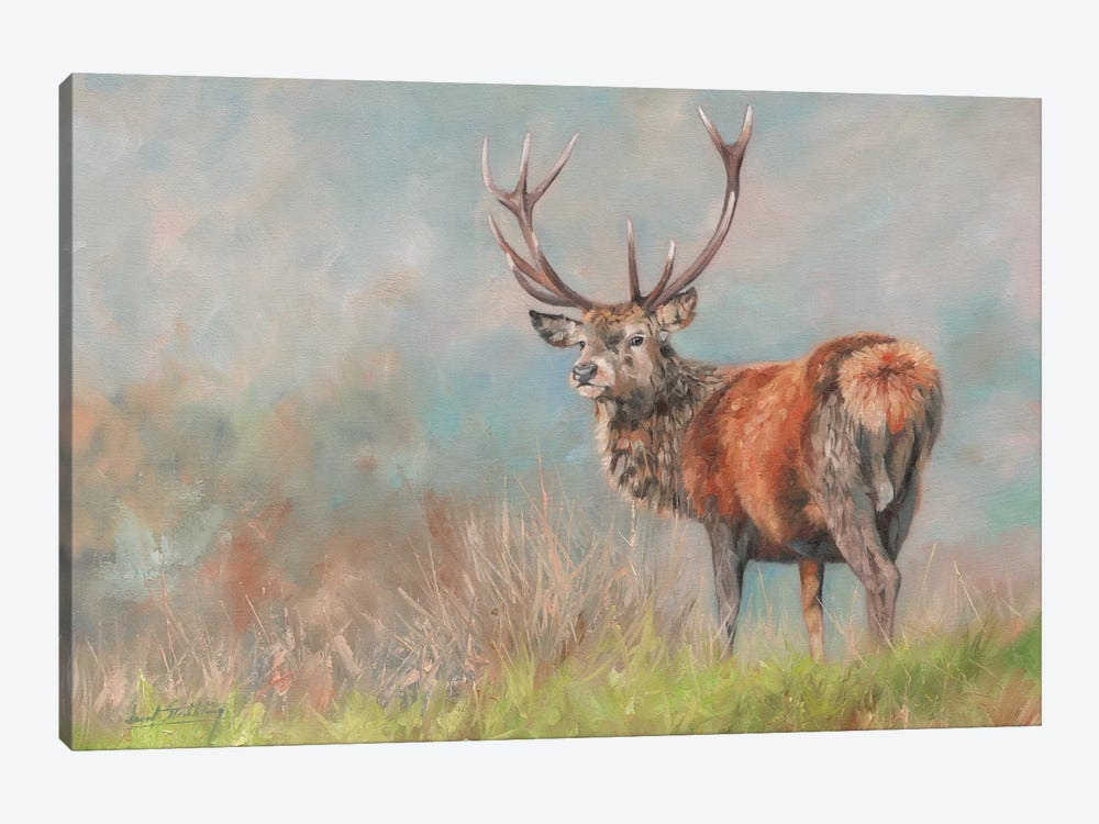 Red Deer II by David Stribbling 1-piece Canvas Print