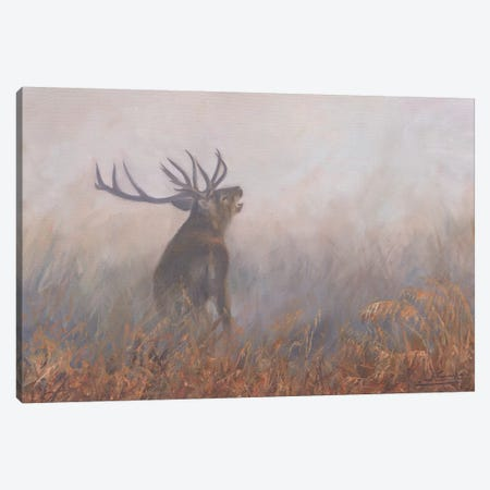Red Deer Misty Morning Canvas Print #STG85} by David Stribbling Canvas Print