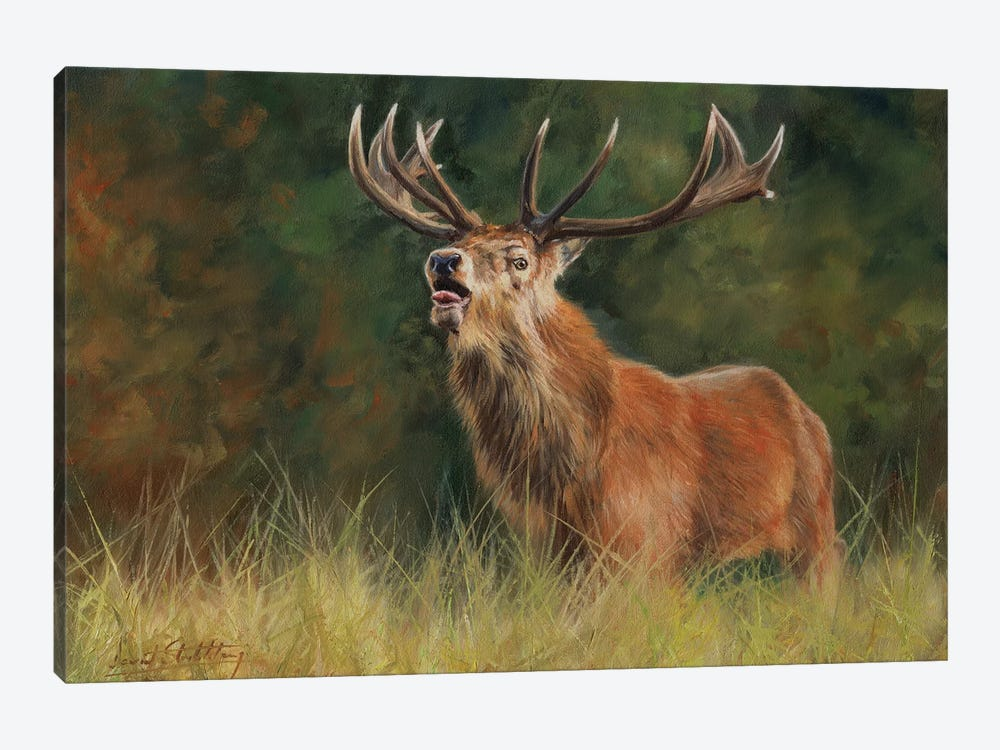 Red Deer Stag by David Stribbling 1-piece Canvas Art Print