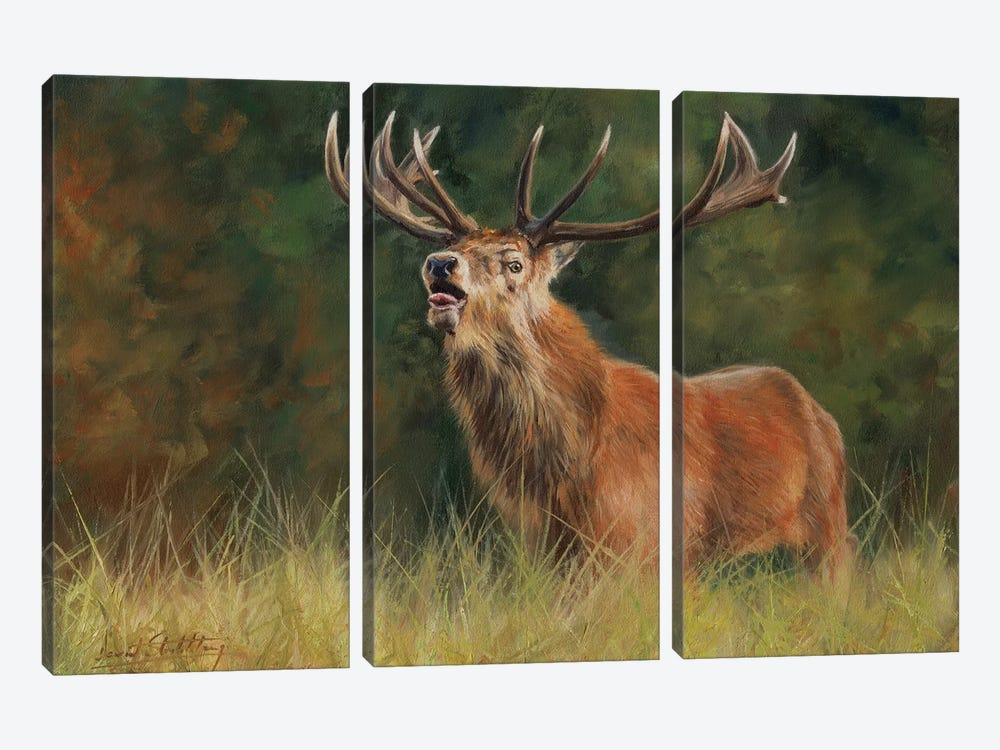 Red Deer Stag by David Stribbling 3-piece Art Print