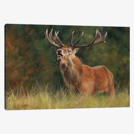 Red Deer Stag Canvas Print #STG86} by David Stribbling Canvas Art Print