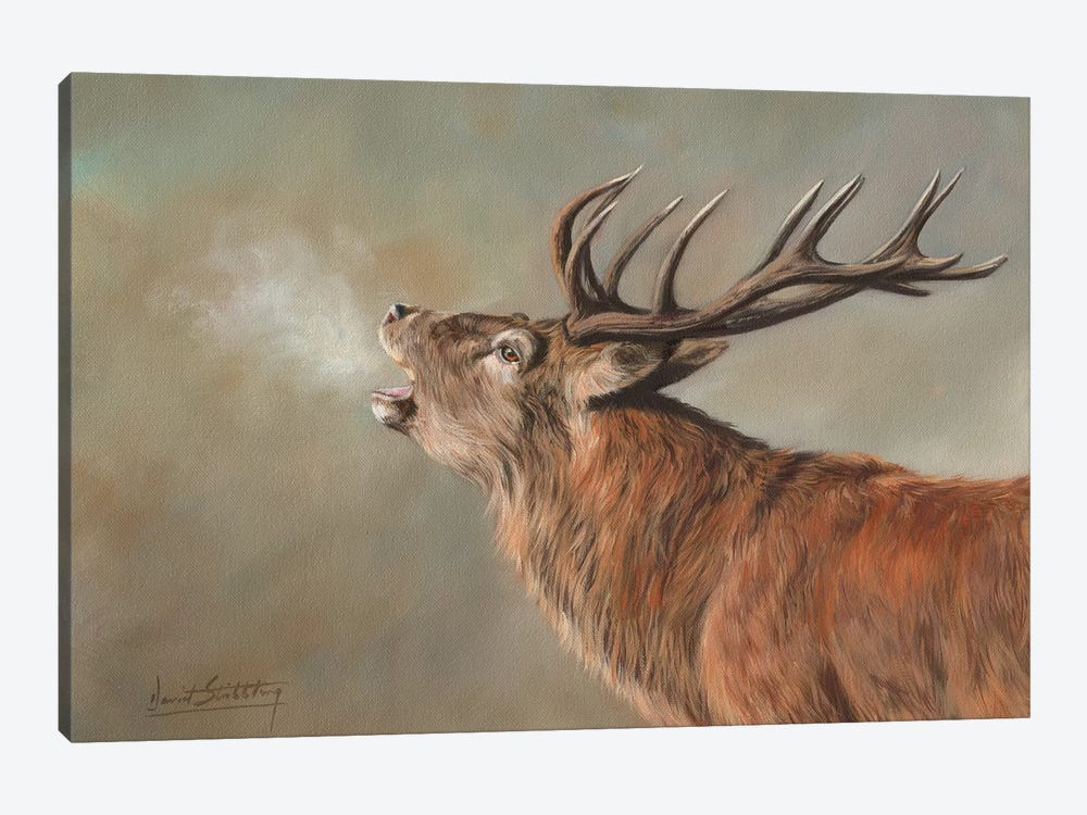 Red Deer Stag Early Morning by David Stribbling 1-piece Canvas Artwork