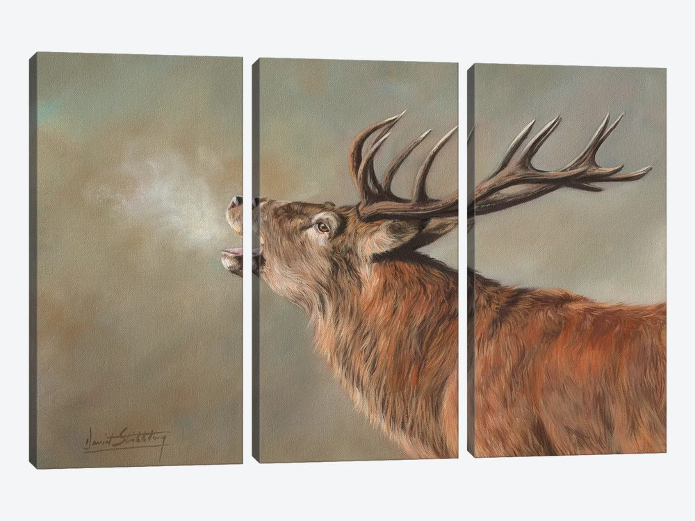 Red Deer Stag Early Morning by David Stribbling 3-piece Canvas Art