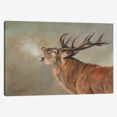 Red Deer Stag Early Morning 3-Piece Canvas #STG87} by David Stribbling Art Print