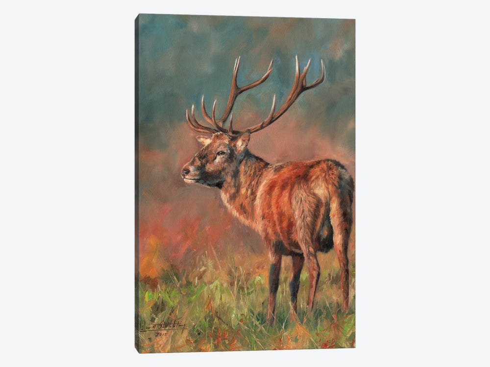 Red Deer Stag Evening Light by David Stribbling 1-piece Canvas Art Print